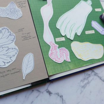 Scientific illustration: Curate your own seasonal collection